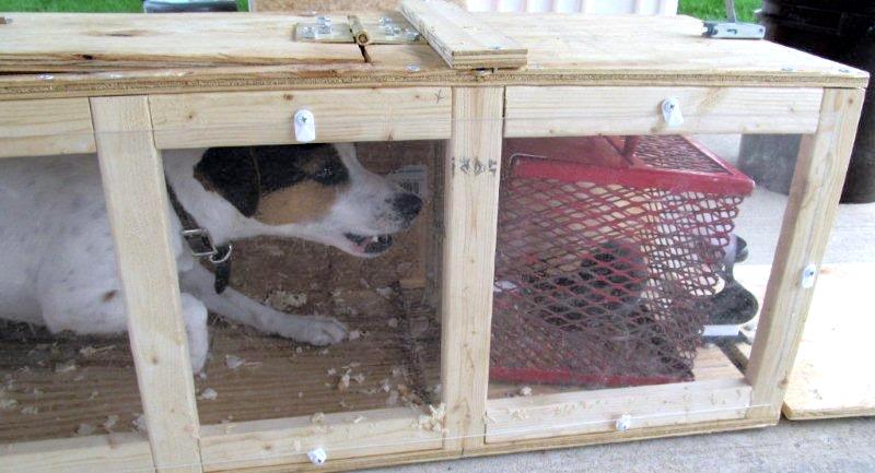 dog-in-clear-tunnel_50857013596_o